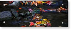 Maple Leaves-0009 Acrylic Print by Sean Shaw