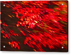 Maple Red Abstract Acrylic Print