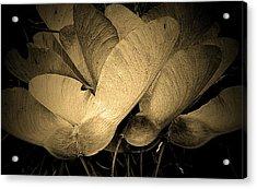 Maple Seeds 2011 Acrylic Print by Beth Akerman
