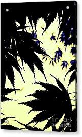 Maple Silhouette Acrylic Print