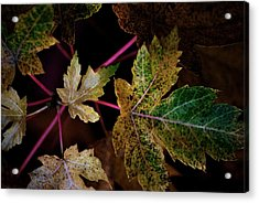 Maple Spatter Acrylic Print by Trudi Southerland