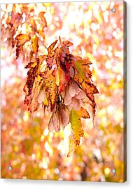 Maple Tree In Autumn Acrylic Print