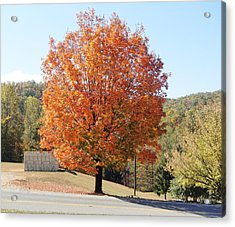 Maple Tree In The Parking Lot Acrylic Print