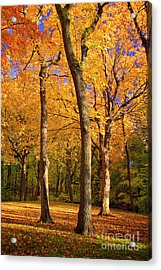 Acrylic Print featuring the photograph Maple Treo by Scott Kemper