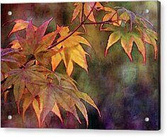 Maples Golden Glow 5582 Idp_2 Acrylic Print