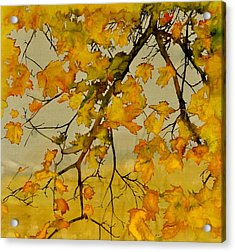Maples In Autumn Acrylic Print