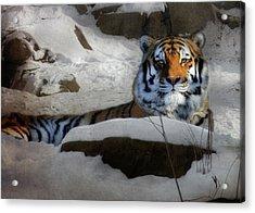 Mara Acrylic Print by Lori Deiter