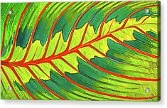 Maranta Red 2 Acrylic Print by ABeautifulSky Photography