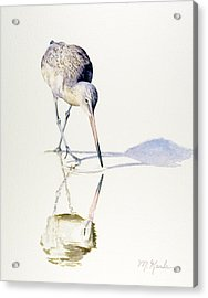 Marbled Godwit Times Three Acrylic Print