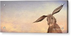 March Hare Acrylic Print by John Edwards
