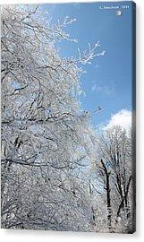 March Winters  Acrylic Print by Carolyn Postelwait