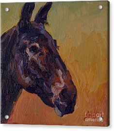 Marcus Acrylic Print by Patricia A Griffin