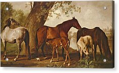 Mare And Foals Acrylic Print by George Stubbs