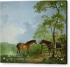 Mare And Stallion In A Landscape Acrylic Print by Sawrey Gilpin