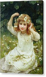 Marguerites Acrylic Print by Frederick Morgan