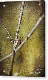 Marienkaefer - Ladybird Acrylic Print