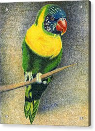 Marigold Lorikeet Acrylic Print