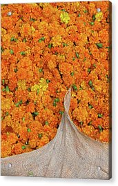 Marigolds II Acrylic Print by David L Griffin