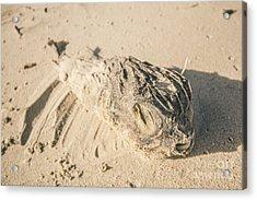 Marine Deaths Acrylic Print