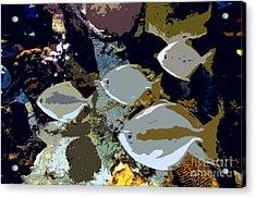 Marine Life Acrylic Print by David Lee Thompson