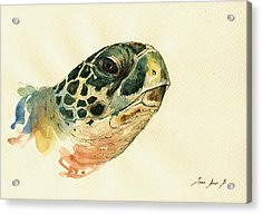 Marine Turtle Acrylic Print by Juan  Bosco