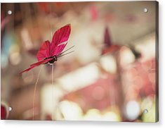 Acrylic Print featuring the photograph Mariposa by Lora Lee Chapman