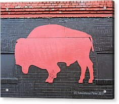 Maris' Bison Acrylic Print