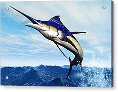 Marlin Jump Acrylic Print by Corey Ford
