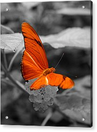 Marmalade Delight Colorized Acrylic Print