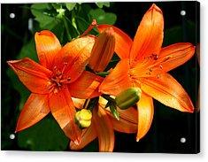 Marmalade Lilies Acrylic Print