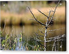 Marsh Afternoon Acrylic Print by Mary  Haber
