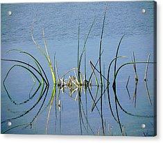 Marsh Design Acrylic Print by Rosalie Scanlon