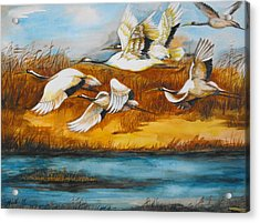 Marsh Flight Acrylic Print