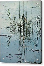 Marsh Grass Acrylic Print by Donna Thomas