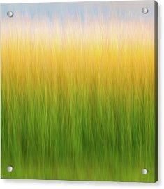 Marsh Grass Acrylic Print