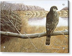 Acrylic Print featuring the painting Marsh Hawk by Laurie Stewart