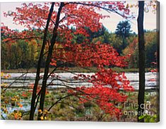 Acrylic Print featuring the photograph Marsh In Autumn by Smilin Eyes  Treasures