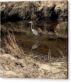 Marsh Bird Acrylic Print