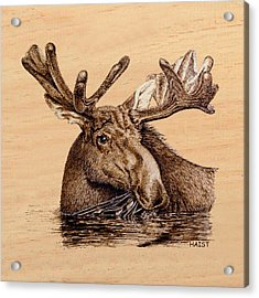 Marsh Moose Pillow/bag Acrylic Print by Ron Haist