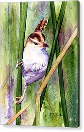 Silver Creek Marsh Wren Acrylic Print