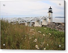 Marshall Point Daisies Acrylic Print