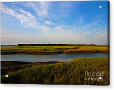 Marshland Charleston South Carolina Acrylic Print