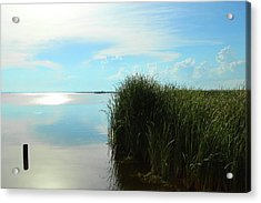 Marshland Acrylic Print