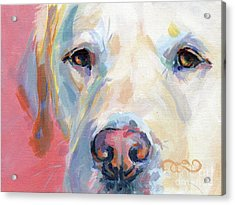 Martha's Pink Nose Acrylic Print by Kimberly Santini