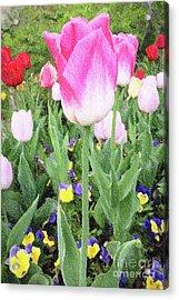Marthas Vineyard Tulips 1 Acrylic Print by David Millenheft