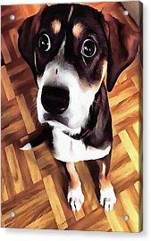 Marty The Soulful Eyed Dog  Acrylic Print by Tracey Harrington-Simpson