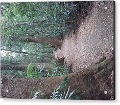 Mary Cairncross Rainforest  Acrylic Print