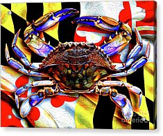 Maryland Blue Crab Acrylic Print