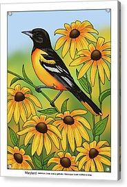 Maryland State Bird Oriole And Daisy Flower Acrylic Print