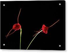 Acrylic Print featuring the photograph Masd Cheryl Shohan by Catherine Lau